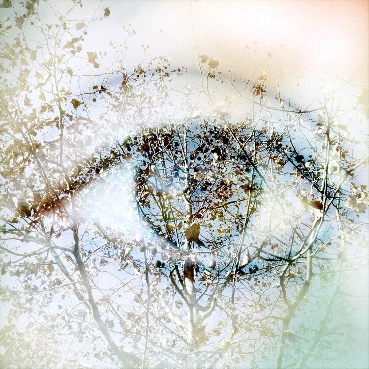 Come nelle Metamorfosi di Ovidio, Alessandra Calò unisce corpo e natura in un abbraccio, dentro al quale ciascuno assume le sembianze dell'altro